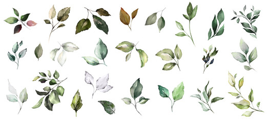 Wall Mural -  set watercolor leaves. collection herbal illustration. Botanic composition. nature modern design