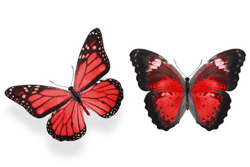 beautiful two red butterflies isolated on white background