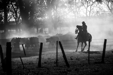 Cowboy guided to the cattle with his horse in the Argentine pampa, black and white