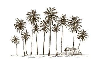 Traditional village hut with coconut trees in Java island, Indonesia