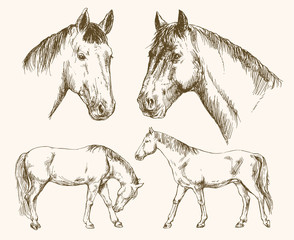 Horses. Hand drawn set.