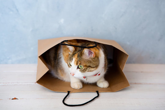 cat in paper bag