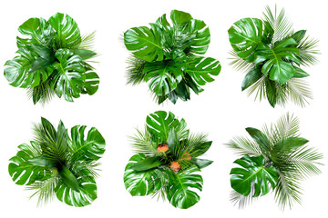 Set of six bouquets of various tropical leaves on white background