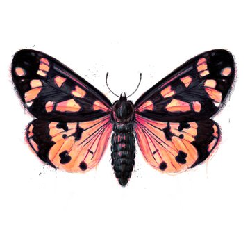 Hand painted watercolour moth / butterfly with paint splatter No. 18b
