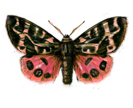 Hand painted watercolour moth / butterfly with paint splatter No. 17b