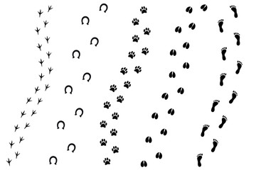 Vector flat cartoon set of black different animal and human foot print isolated on white background