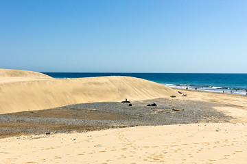 Gran Canaria,Maspalomas sand dunes on Atlantic ocean, landscape in Gran Canaria - Canary Islands, Spain