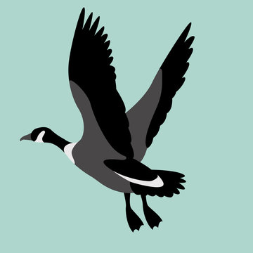 goose canadian, .vector illustration, flat style ,profile