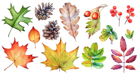 Watercolor collection of autumn leaves, berries and pine cones on white background. Wall mural