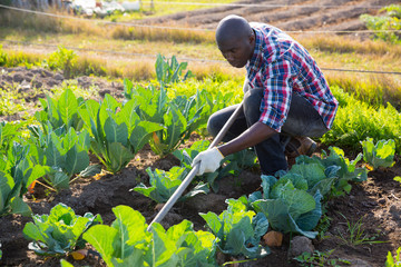 Male gardener working at homestead