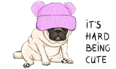 colorful vector illustration of funny pug puppy dog sitting down with pink knitted  hat and text its hard being cute