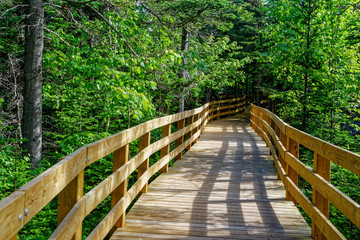 Boardwalk, part of the trail, across wetlands and through forest at Greenwich, Prince Edward Island National Park, PEI, Canada