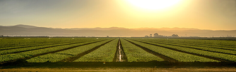 Growing Fields Of California Wall mural