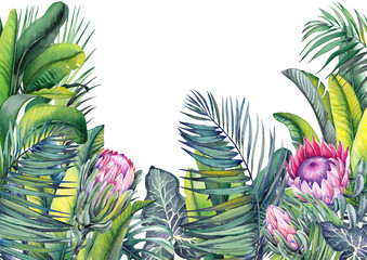 Tropical wallpaper with exotic protea flowers, palm and banana leaves. Watercolor illustration on white background.