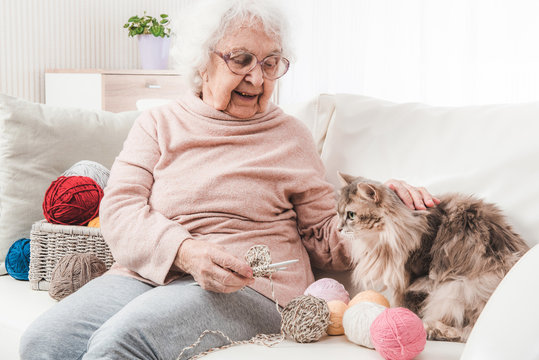 Grandmother knitting and stroking cat on the sofa