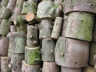 stack of sawn stems of trees near the road in the woods