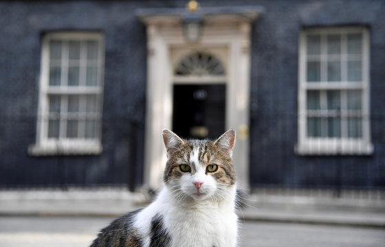 Larry the cat sits in the street, at Downing Street in London