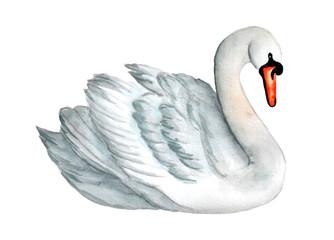 Watercolor white swan illustration, romantic and beautiful bird