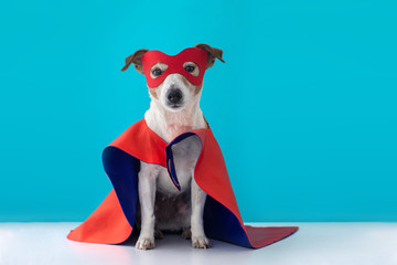 Dog super hero costume. little jack russell wearing a red mask for carnival party isolated blue background Wall mural