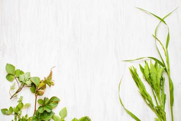 植物と白い板