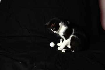 portrait of tuxedo cat with a ball on black background