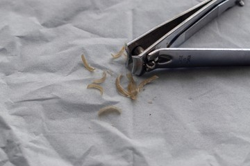 Nail cutter with clipped nails