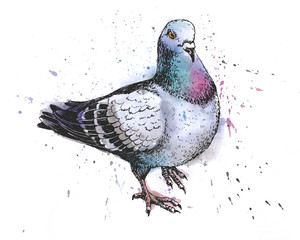 hand drawn city grey pigeon watercolor drawing