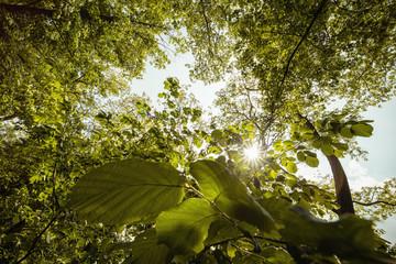 Wald Perspektive