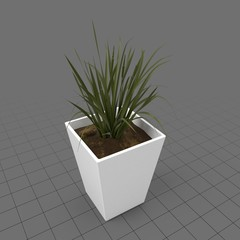 Plant in ceramic planter