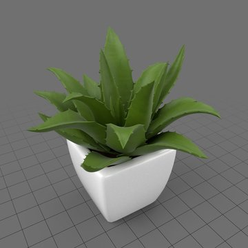 Succulent in planter