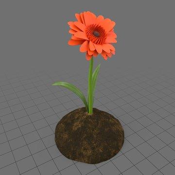 Daisy in soil
