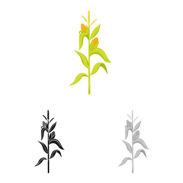 Vector design of corn and stalk logo. Collection of corn and field stock symbol for web.