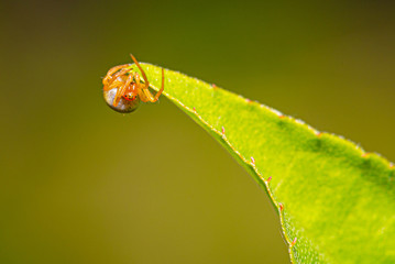 Cute small spider with colorful body on a green leaf