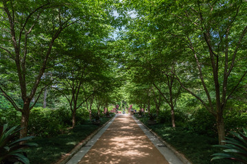 Beautiful shaded alley at a botanical garden in Durham, North Carolina, in springtime Wall mural