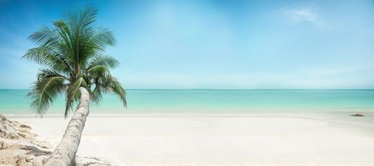 Paradies strand mit Palme