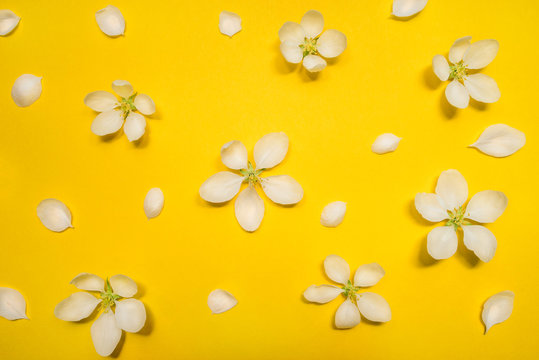 Beautiful spring apple flowers at yellow background. Spring-summer concept.
