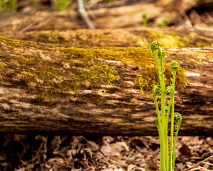 New ferns growing in forest