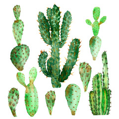 Watercolor hand-painted nature cactus set, green desert plants collection isolated on the white background