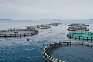 Fish farming nets and cage in the sea. Circular fish cage