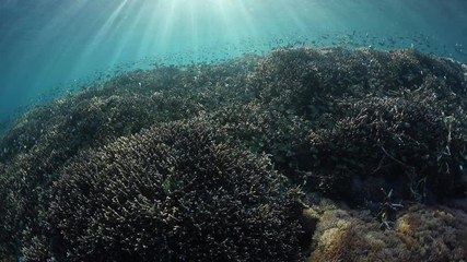 Fototapete - A beautiful coral reef is thriving along the edge of a remote, rugged island in Komodo National Park, Indonesia. This tropical area is known for its high marine biodiversity.