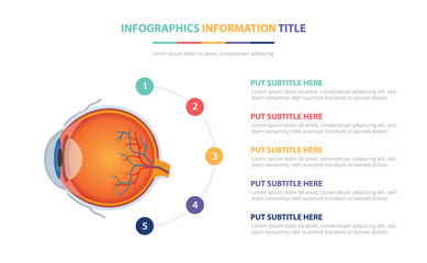 human eye anatomy infographic template concept with five points list and various color with clean modern white background - vector