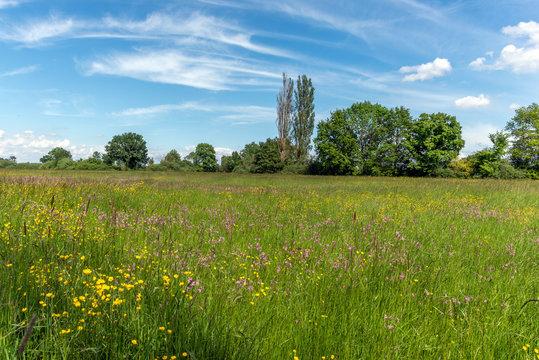 Prairie en fleur au printemps