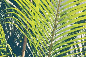 Foto op Canvas Tropische Bladeren Palm branch tropical background, toned. Close-up