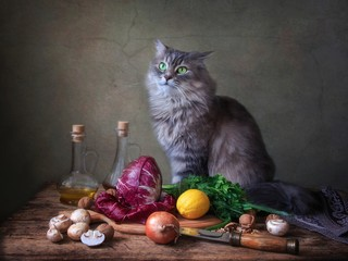 Still life with radicchio salad and curious kitty