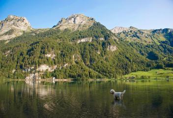 Hund am Klöntalersee in der Schweiz