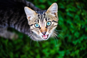 cat with amazing eyes