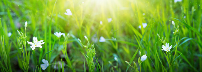 Natural background with green grass and sunbeam.