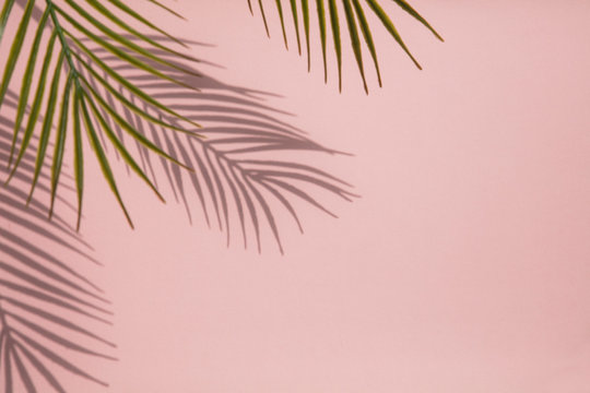 Tropical palm tree leaf shadow on a pastel pink background. Summertime layout