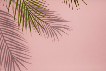 Tropical palm tree leaf shadow on a pastel pink background. Summertime layout Wall mural