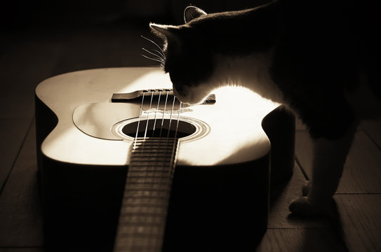 Silhouette of a fluffy cat, illuminated by sunlight, interested in looking at the acoustic wooden six-string guitar in the Sepia filter
